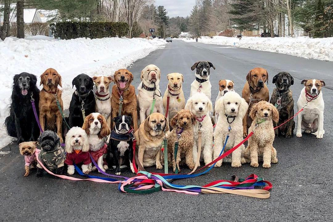 Dog walker group shares photos of their adorably ...